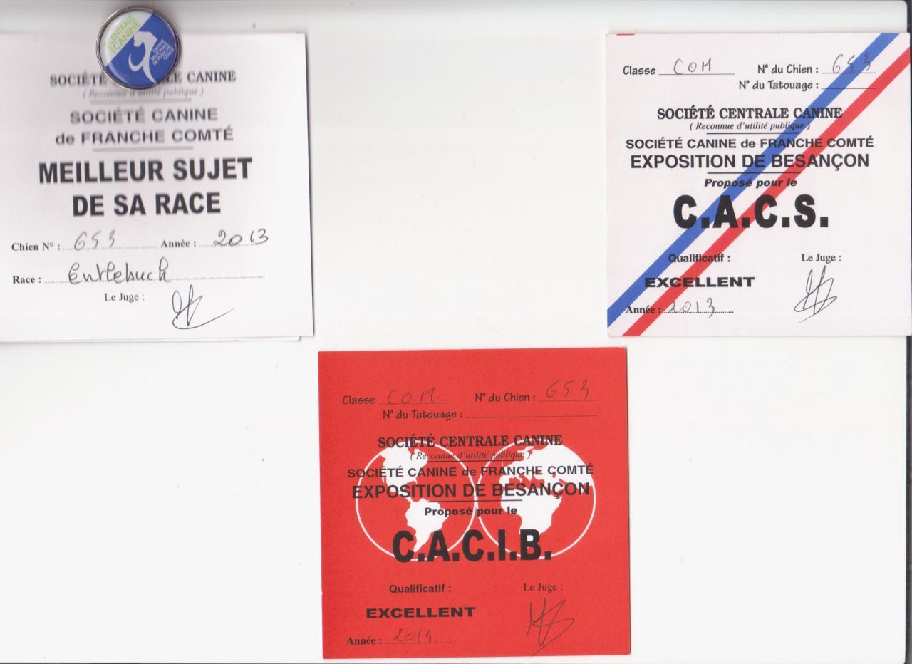 1er EXCELLENT CACS CACIB BOB (Meilleur de Race) Besançon 21 sept 2013
