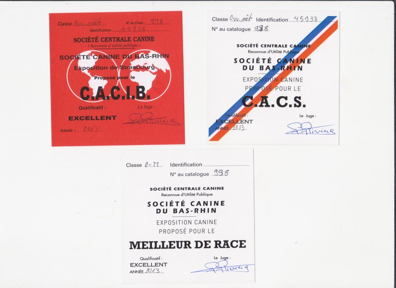 MEILLEUR DE RACE CACIB CACS 1ER EXCELLENT